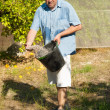 Fertilizing — Stock Photo