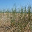 Dune vegetation — Stock Photo #11835395