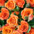 Apricot roses bouquet — Photo
