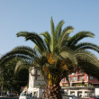 Palm tree — Photo #11939165