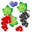 Currant — Stock Vector