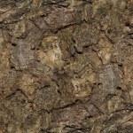 Wood grain — Stock Photo
