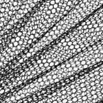 Black mesh on white — Stock Photo