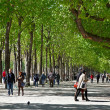 Stock Photo: Green Boulevard