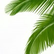 Leaves of palm tree — Stock Photo #10803073