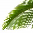 Leaf of palm tree — Stock Photo #10975464