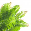 Stock Photo: Green leaves on white background.