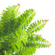 Green leaves on white background. — Stock Photo