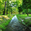 River in summer  park.  Nature composition - Stock Photo