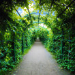 Stock Photo: Green archway in garden.