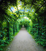 Green archway in a garden. — Stock Photo