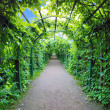 Stock Photo: Green archway in garden. Peterghof.St.Peterburg