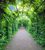 Green archway in a garden. Peterghof.St.Peterburg — Stock Photo