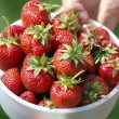 Fresh picked strawberries — Stock Photo #10750447
