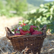 Strawberries in the basket - Stockfoto