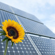 Sunflower and solar panels - Stock Photo
