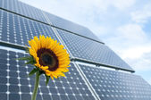 Sunflower and solar panels — Stock Photo