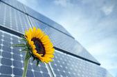 ヒマワリと太陽の光と太陽電池パネル — ストック写真