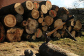 Firetree - logs — Stock Photo