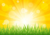 Bright vector sun effect with green grass field — Stock Vector