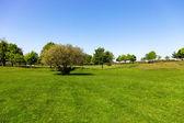 Grüne Gras auf einem Golfplatz — Stockfoto