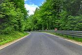 Estrada sinuosa de curva em uma floresta de faias verdes — Foto Stock