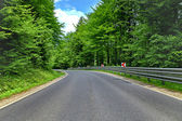 Winding curve road in a beech green forest — Stock Photo
