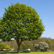 Tree in green park — Stock Photo #11051593