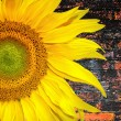 Stock Photo: Sunny sunflower banner