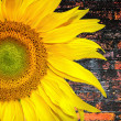 Sunny sunflower banner — Stock Photo