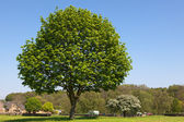 Tree in green park — Stock Photo
