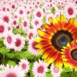 Summer flower banner — Stock Photo