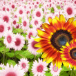 Stock Photo: Summer flower banner