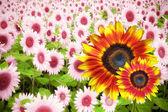 Summer flower banner — Stock Photo