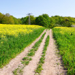 Agricultural crops — Stock Photo