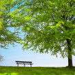 Green park in spring - Stock Photo