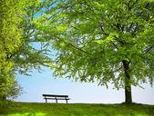 Zelený park na jaře — Stock fotografie