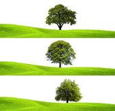 Green environment and tree — Stock Photo