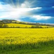Stock Photo: Spring rural landscape