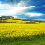 Spring rural landscape — Stock Photo