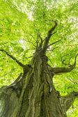 Tree — ストック写真