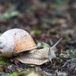 escargot — Photo #11531303