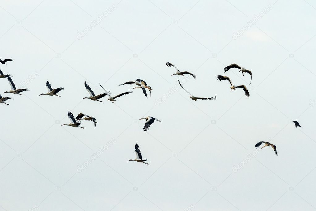 Many birds flying in the sky, nature series — Stock Photo #11600355