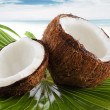 Coconutcoconut - Stok fotoraf
