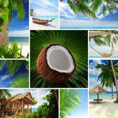 Tropic mix — Stock Photo