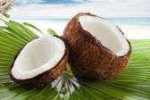 Coconutcoconut — Stockfoto