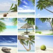 Royalty-Free Stock Photo: Tropic mix
