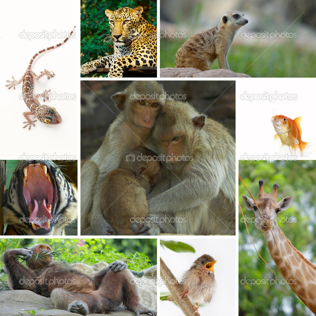 Animal theme collage composed of different images — Photo #12385004