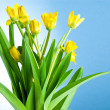 Stock Photo: Seven Yellow spring flowers with green leaves on blue backgrou