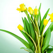 Stock Photo: Yellow spring flowers with green leaves on lettuce background